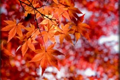 Trees, Autumn Leaves & Disease Prevention