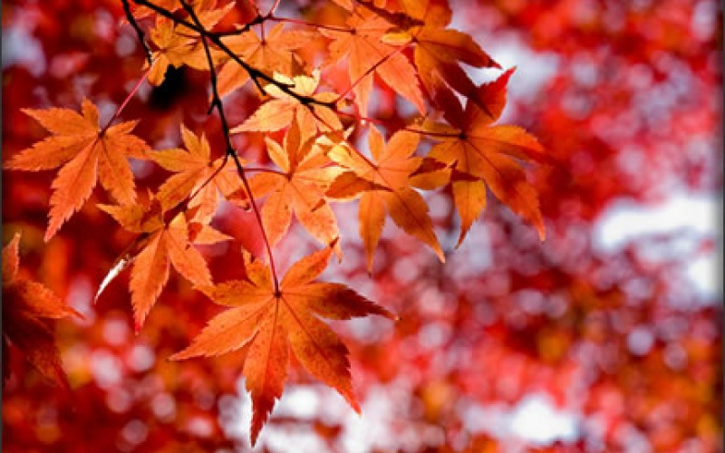 Trees, Autumn Leaves & Disease Prevention