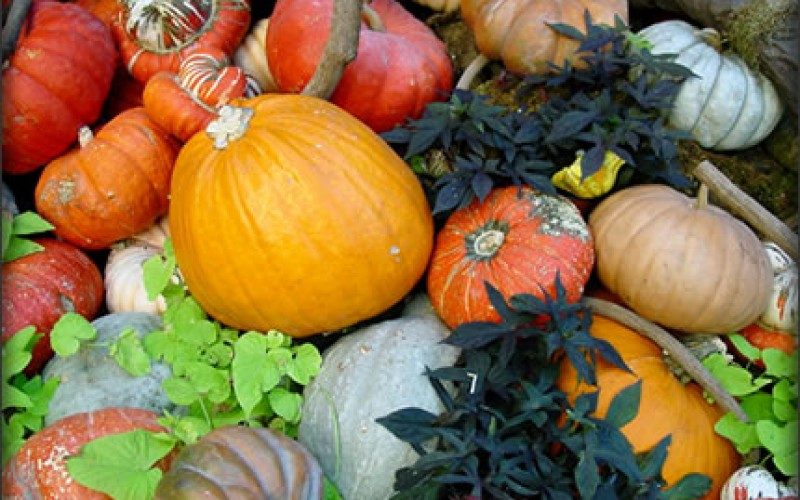 Thanksgiving Home Decorating Ideas