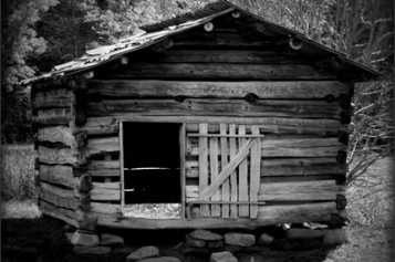 Should You Renovate or Replace Your Wood Shed?