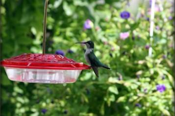 You Can Create a Backyard Bird Habitat