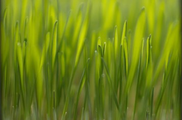 You Can Prep Your Lawn For Spring