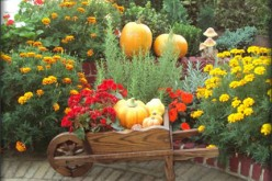 7 Quick and Easy Fall Yard Projects