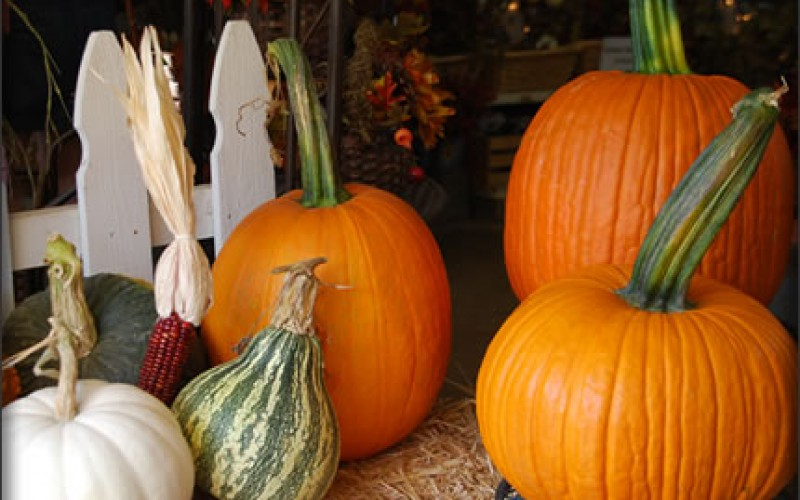 Inexpensive Fall Home Decor Ideas