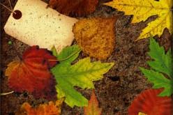 7 Fall Organizing Tips