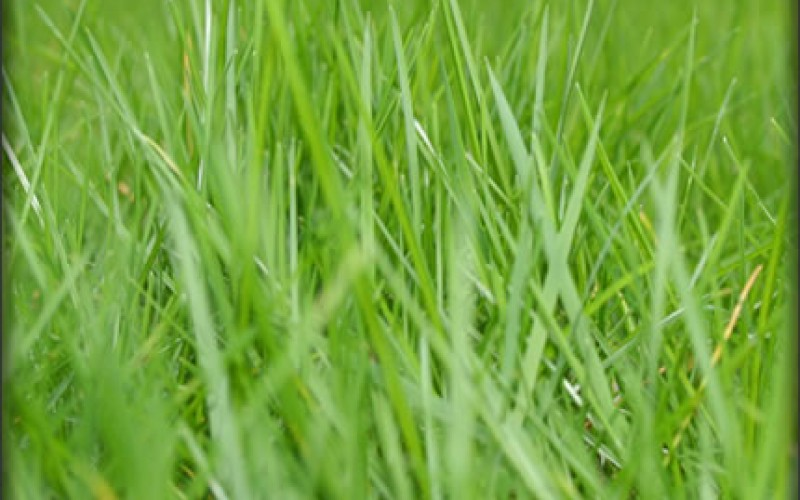 Fall Overseeding and Your Patchy Lawn