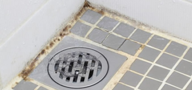 Mold Problems and Your Home