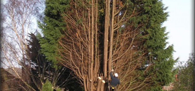 How to Choose a Tree Cutting Professional