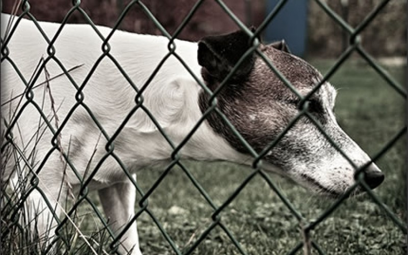 Fencing Considerations for the Dog Owner
