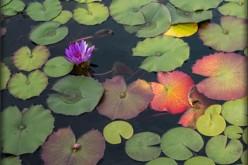 How to Enjoy a Garden Pond