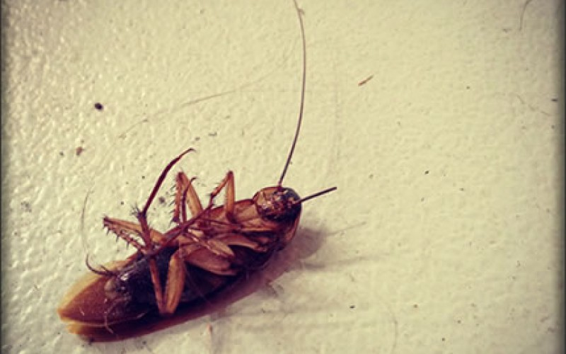 Insect Control in Your Home: Prevention is Better Than Cure