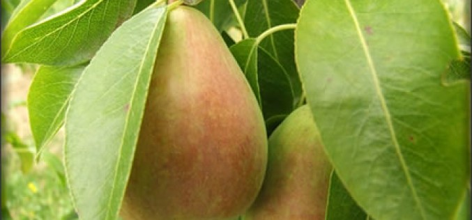 6 Benefits of Growing Fruit Trees In Your Backyard