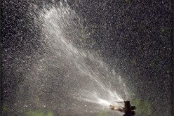 Yard Care: Managing Water Usage