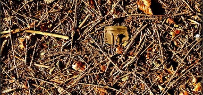 You Can Trim Your Garden With Pine Needles