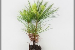How to Care For a Newly Planted Tree