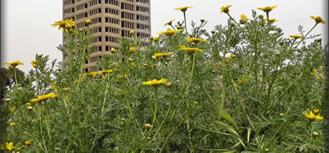 Urban Gardening and Raised Beds