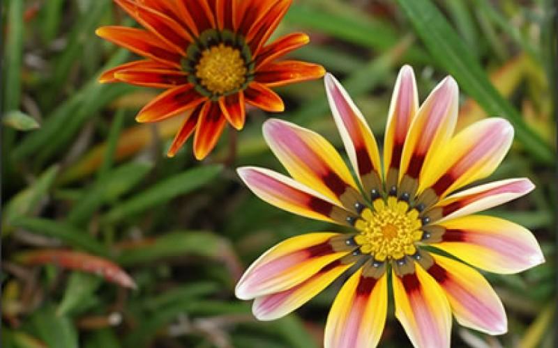 How to Maintain a Healthy Garden