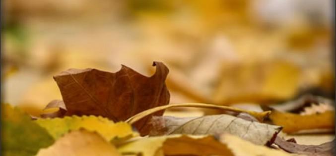 4 Festive Autumn Home Decor Tips