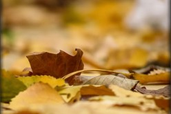 Fall Clean Up: Tackling Leaves
