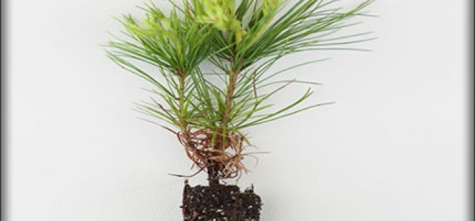 Smart Tips For Tree Planting