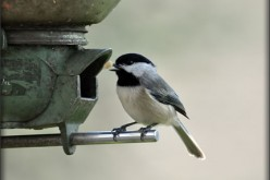 Bird Watching: A Comprehensive Guide for Beginners