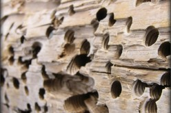 5 Signs of Termites and How to Eradicate Them