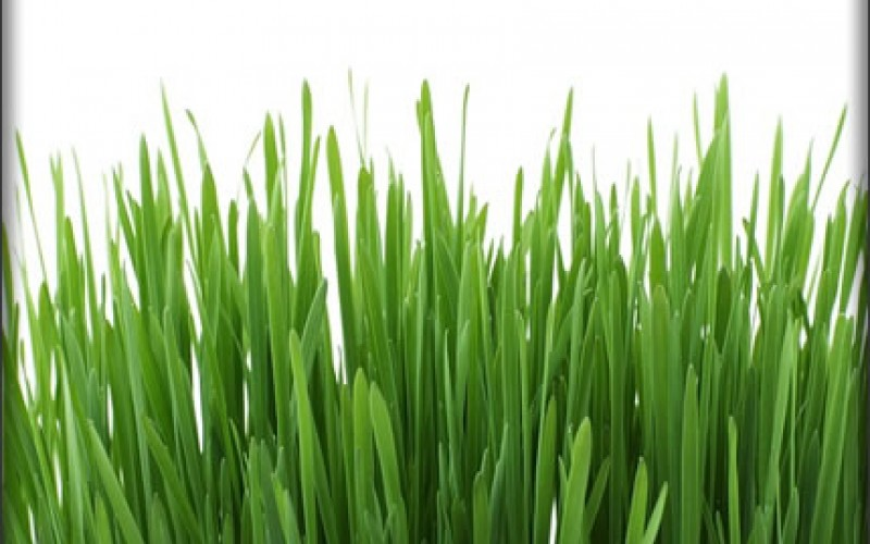 Pointers on Getting your Lawn Ready for Spring