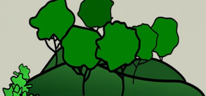 Garden Landscaping Ideas on a Budget