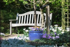 Four Things You Can Do To Liven Up Your Front Yard