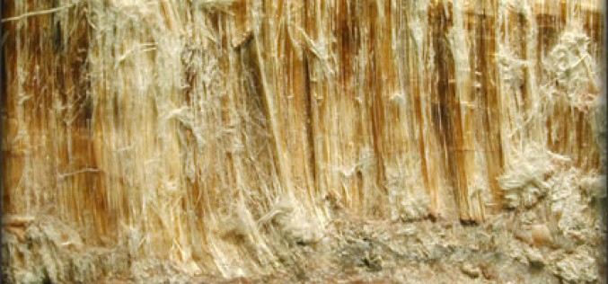 Five Facts About Asbestos That You Should Know