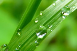 Be The Star of The Neighborhood: Getting Green Grass