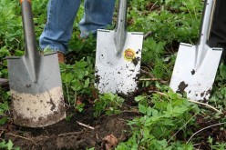 Essential Tools for Easy Gardening
