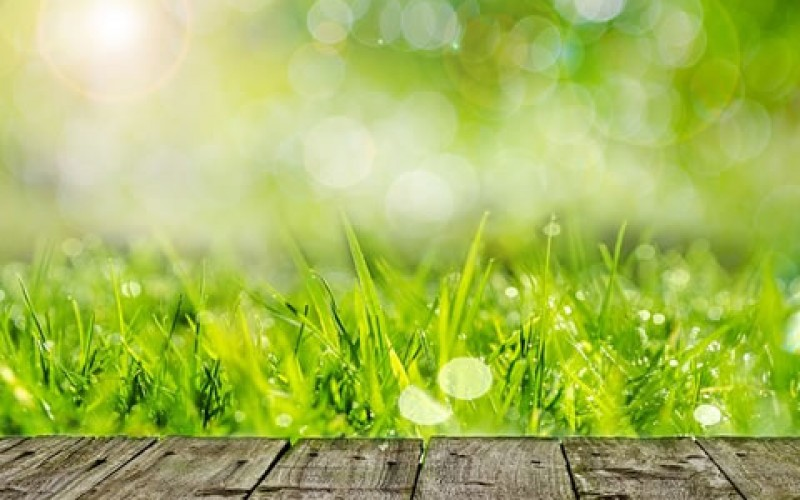 Getting Your Yard Ready for the Summer Season: 4 Things to Remember