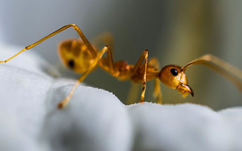 4 Ways to Prevent Ants from Invading Your Kitchen