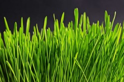 Five Tips to Keep Your Lawn Beautiful in 2015