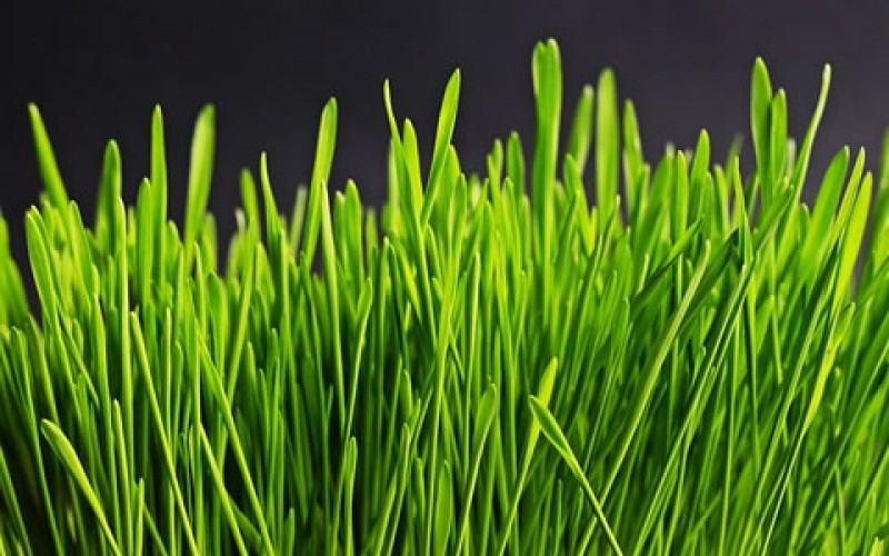 Five Tips to Keep Your Lawn Beautiful