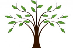 Staking a Newly Planted Tree – Methods and Specifications