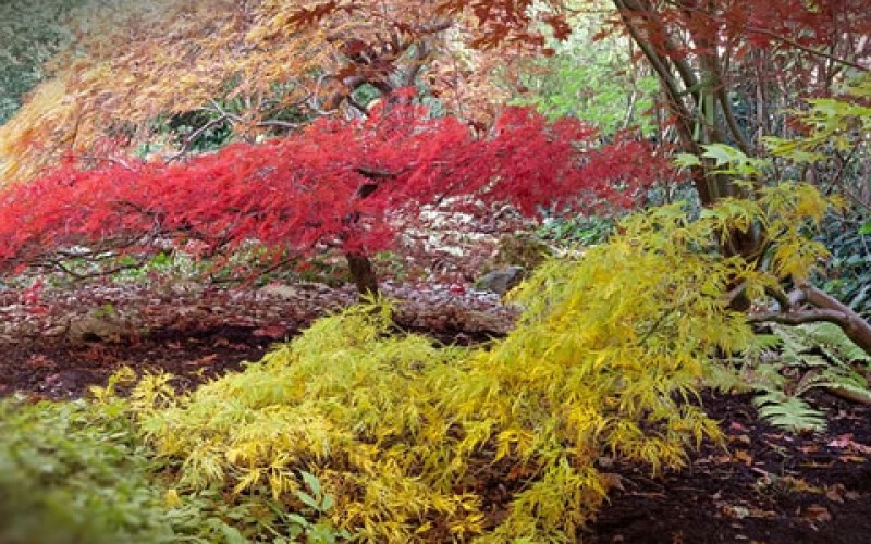 How to Choose Lawn-Friendly Trees for Your Yard