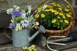 How to Start Your Own Garden in Your Back Yard