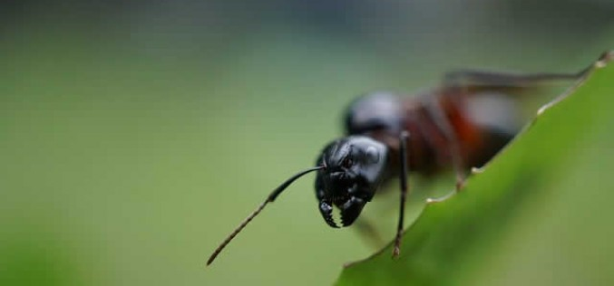 What Are The Most Common Pests You Need To Protect Your Home From In Autumn?