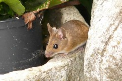 Home Wrecker! 3 Signs you Need Pest Control