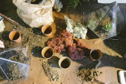 Soil PH And Your Garden Plants – What You Need to Know
