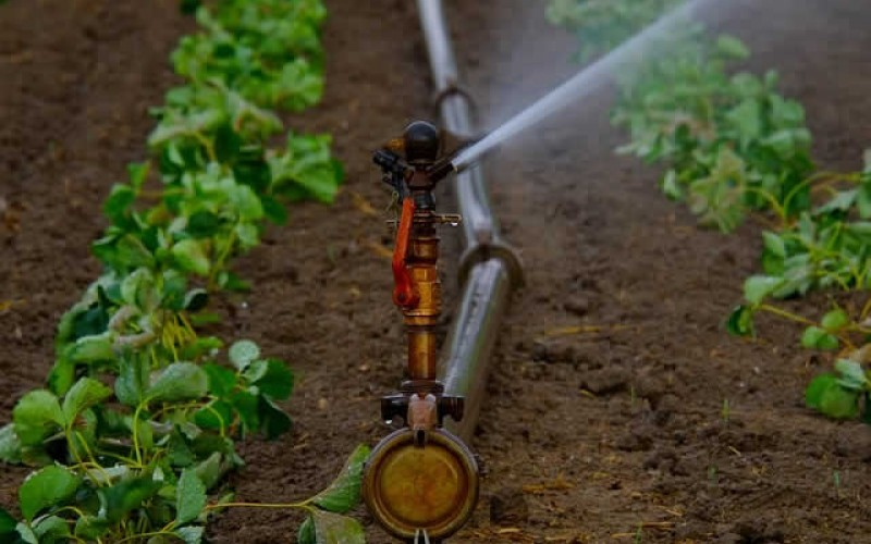 Irrigation Made Easy – Automate Your Gardening