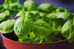 4 Tips For Growing Herbs Indoors During the Winter Season