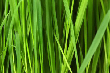 Guide to Lawn Care: Grass Planting and Maintenance
