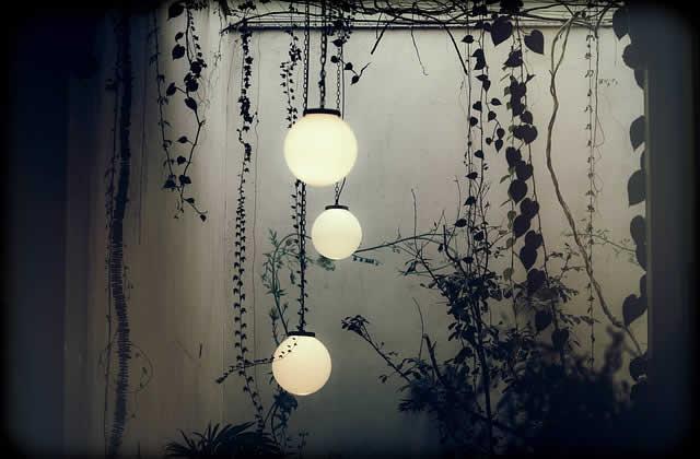 hanginglambs