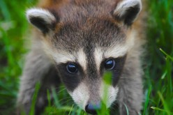 Spring Critters: How to Keep the Pests at Bay