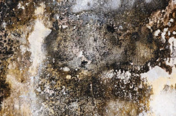 Your Home's Secret Toxins: How To Remove Black Mold