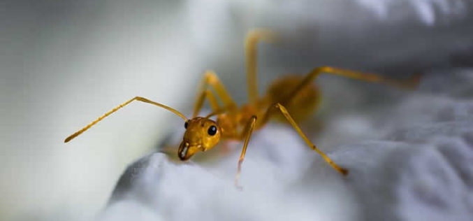 <span>Weekly Tip for May 22:</span> 5 Ways to Handle Pests in your Home this Spring