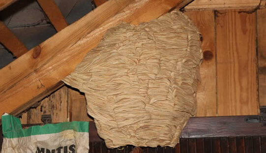 Attic Restoration Process From Wildlife Invasion Damage